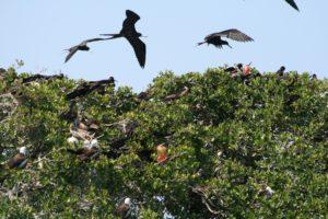 birding mexico