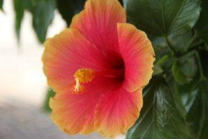 flora tulum